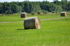 Αλμπέρτα συσκευάζει το αγροτικό καλοκαίρι λιβαδιών τοπίων σανού πεδίων Στοκ Εικόνες