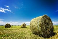 Αλμπέρτα συσκευάζει το αγροτικό καλοκαίρι λιβαδιών τοπίων σανού πεδίων Στοκ εικόνα με δικαίωμα ελεύθερης χρήσης