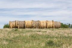 Αλμπέρτα συσκευάζει το αγροτικό καλοκαίρι λιβαδιών τοπίων σανού πεδίων Στοκ φωτογραφία με δικαίωμα ελεύθερης χρήσης