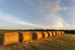 Αλμπέρτα συσκευάζει το αγροτικό καλοκαίρι λιβαδιών τοπίων σανού πεδίων Στοκ Εικόνα