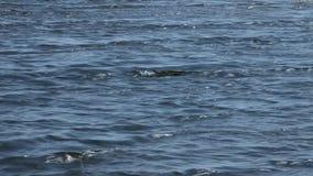Αλμυρή λίμνη Baskunchak κυμάτων απόθεμα βίντεο