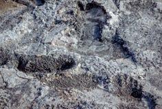 Αλμυρό υπόβαθρο επιφάνειας ακτών λιμνών Στοκ Εικόνα