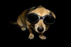 Αλλοδαπό σκυλί Στοκ Φωτογραφία