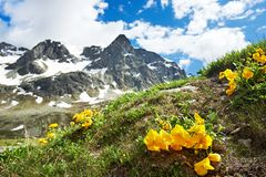 Αλπικά βουνά με τα λουλούδια Στοκ φωτογραφίες με δικαίωμα ελεύθερης χρήσης