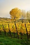 Αλσατία wineyard Στοκ Εικόνες