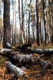 αλσύλλιο Στοκ φωτογραφίες με δικαίωμα ελεύθερης χρήσης