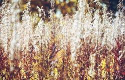 Αλσύλλιο Fireweed στοκ εικόνες