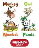 Αλφάβητο ζώων ή ABC Στοκ φωτογραφίες με δικαίωμα ελεύθερης χρήσης