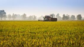 Αλωνίστε το ρύζι Στοκ Φωτογραφίες