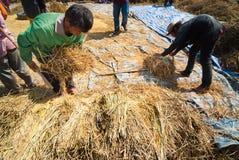 Αλώνισμα ρυζιού στην Ταϊλάνδη Στοκ φωτογραφία με δικαίωμα ελεύθερης χρήσης