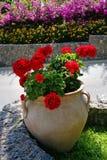 Βάζο αργίλου με τα κόκκινα λουλούδια στοκ φωτογραφίες
