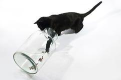 βάζο γατών Στοκ εικόνα με δικαίωμα ελεύθερης χρήσης