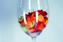 Βάζο γυαλιού που γεμίζουν με τα κόκκινα ροδαλά πέταλα aromatherapy έννοια Στοκ εικόνα με δικαίωμα ελεύθερης χρήσης
