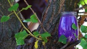 Βάζο γυαλιού στη φύση απόθεμα βίντεο
