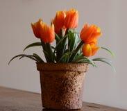 Βάζο με τα λουλούδια για την εσωτερική διακόσμηση Στοκ φωτογραφίες με δικαίωμα ελεύθερης χρήσης