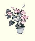 Βάζο με την απεικόνιση μελανιού watercolor hydrangea Στοκ Φωτογραφίες