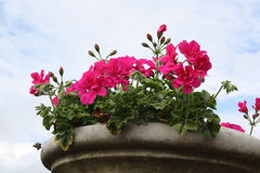 Βάζο λουλουδιών στο στηθαίο Στοκ Φωτογραφίες