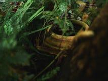 Βάζο στο φύλλο φύσης πράσινων φυτών κήπων Στοκ Εικόνες