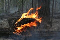 βάλτε φωτιά στο δάσος Στοκ Φωτογραφίες