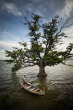 Βάρκα και δέντρο Στοκ εικόνα με δικαίωμα ελεύθερης χρήσης