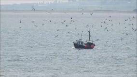 Βάρκα και seagulls ρυμουλκών αλιείας αλιευτικών πλοιαρίων απόθεμα βίντεο