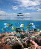 Βάρκα μόνο επάνω από μια κοραλλιογενή ύφαλο με το κοπάδι των ψαριών στοκ εικόνες με δικαίωμα ελεύθερης χρήσης
