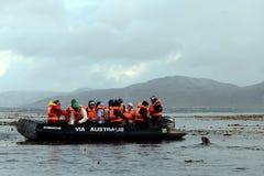 Βάρκα προσοχής σφραγίδων με τους τουρίστες στο κέρατο ακρωτηρίων Στοκ Φωτογραφία