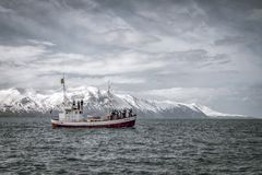 Βάρκα προσοχής φαλαινών στην άνοιξη Ισλανδία Οι άνθρωποι για τις φάλαινες humpback στοκ εικόνες