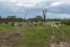 Βάρκες, νεκρές δέντρα και ακακία στις ακτές της λίμνης Naivasha Στοκ φωτογραφία με δικαίωμα ελεύθερης χρήσης