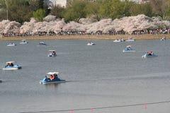 Βάρκες πενταλιών στοκ φωτογραφίες