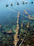 βάρκες που δένονται Στοκ φωτογραφία με δικαίωμα ελεύθερης χρήσης