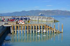 Βάρκες Kaikoura Νέα Ζηλανδία ρολογιών φαλαινών ανοικτές για την επιχείρηση Στοκ Εικόνα