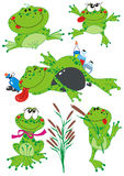 βάτραχοι αστείοι Στοκ Φωτογραφία