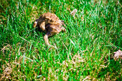 βάτραχοι δύο Στοκ εικόνες με δικαίωμα ελεύθερης χρήσης