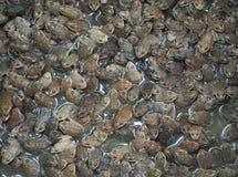 Βάτραχοι μωρών σε μια λεκάνη στοκ εικόνες