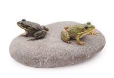 Βάτραχοι σε μια πέτρα Στοκ φωτογραφίες με δικαίωμα ελεύθερης χρήσης