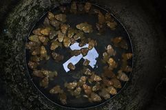 Βάτραχοι στο βάζο Στοκ εικόνα με δικαίωμα ελεύθερης χρήσης