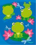 βάτραχοι τρία Στοκ Εικόνες