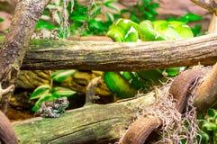 Βάτραχοι Στοκ Φωτογραφίες