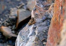 βάτραχος λίγα Στοκ Φωτογραφίες