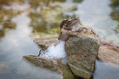 Βάτραχος αυτό φυλή στην πέτρα Στοκ Φωτογραφίες