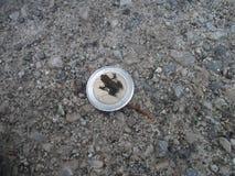 Βάτραχος (ευρο-) Στοκ εικόνα με δικαίωμα ελεύθερης χρήσης