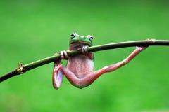 Βάτραχος, ζώα, Στοκ φωτογραφία με δικαίωμα ελεύθερης χρήσης