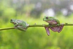 Βάτραχος, ζώα, Στοκ φωτογραφίες με δικαίωμα ελεύθερης χρήσης