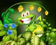 Βάτραχος και λουλούδι Στοκ Φωτογραφίες