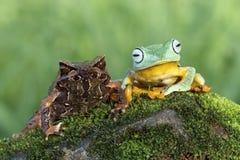 Βάτραχος καλύτερων φίλων Στοκ Εικόνες