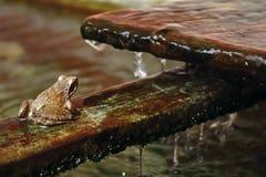 βάτραχος κοντά στο ύδωρ στοκ φωτογραφίες