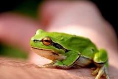 βάτραχος λίγα στοκ φωτογραφίες με δικαίωμα ελεύθερης χρήσης