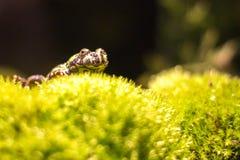 βάτραχος μικρός Στοκ εικόνες με δικαίωμα ελεύθερης χρήσης