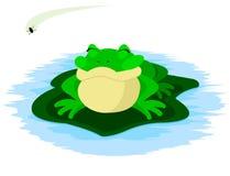 βάτραχος μυγών Στοκ φωτογραφία με δικαίωμα ελεύθερης χρήσης